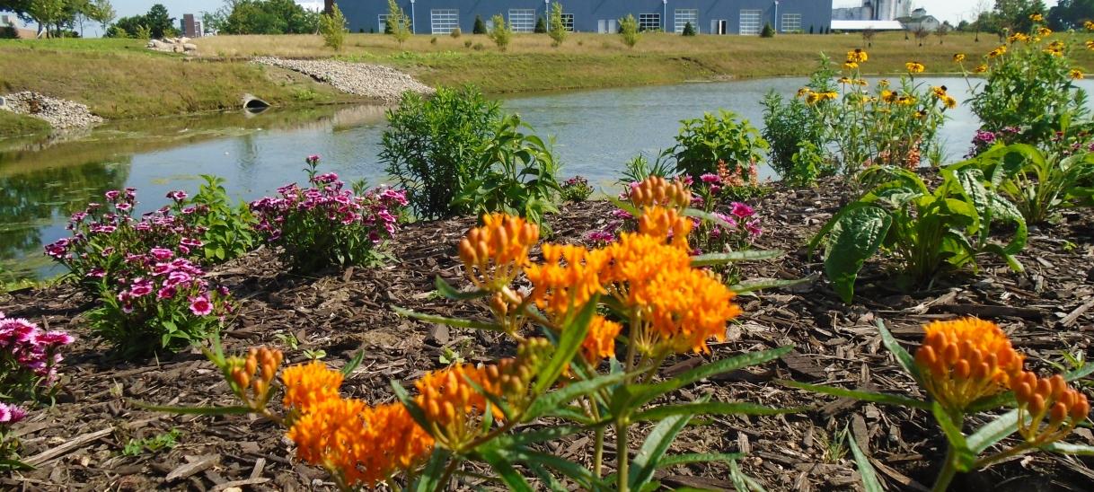 Visit the New Bayer PollinatorGarden